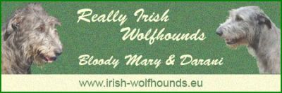 Banner Irish Wolfhounds